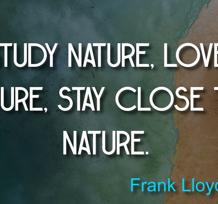 Quotes from Frank Abagnale, Frank Lloyd Wright, Roman Price.