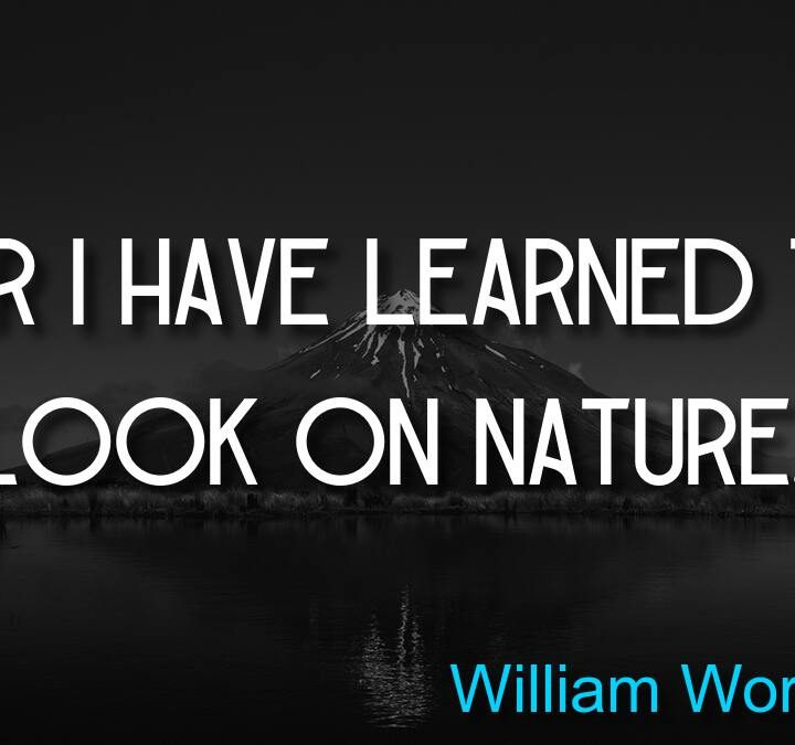 Quotes from William Wordsworth, William Wordsworth, Zach Galifianakis, John Cameron, Alan Watts.